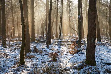 Sfeervol ochtend licht op de Veluwe
