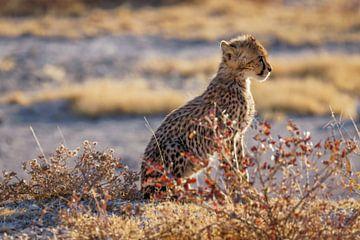 Een jong jachtluipaard ( Acinonyx Jubatus). van Gunter Nuyts