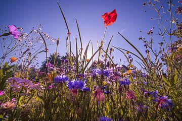 Bloemenveld voor zonsopgang van Kurt Krause