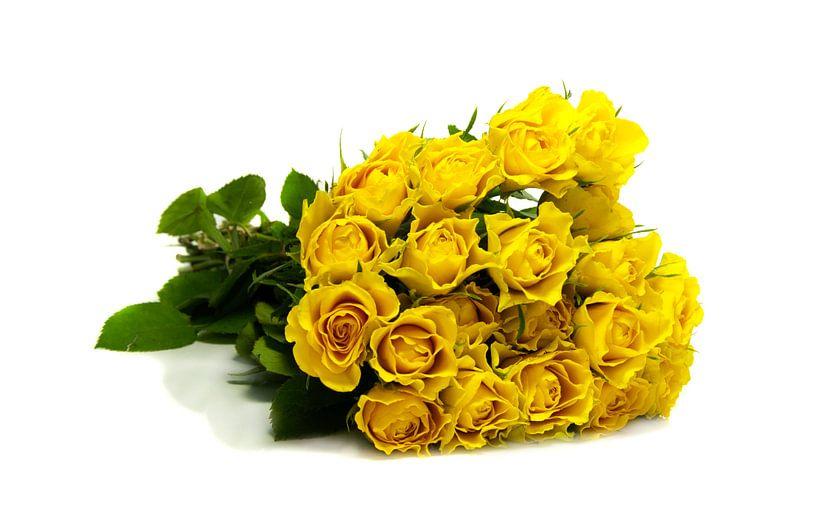 bos gele rozen op witte achtergrond van Compuinfoto .