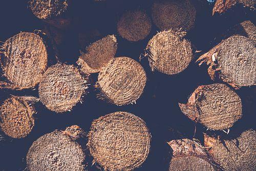 Muster von runden gesägten Baumstämmen im atmosphärischen Sonnenlicht von Fotografiecor .nl