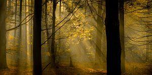zicht op herfstkleuren in het bos
