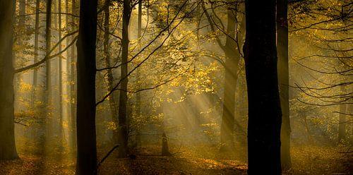 zicht op herfstkleuren in het bos van