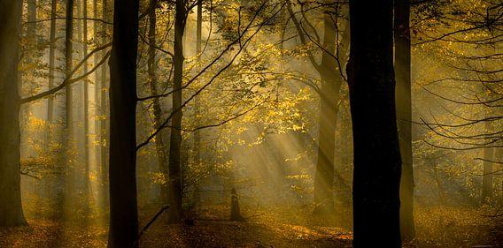 zicht op herfstkleuren in het bos van Lex Scholten