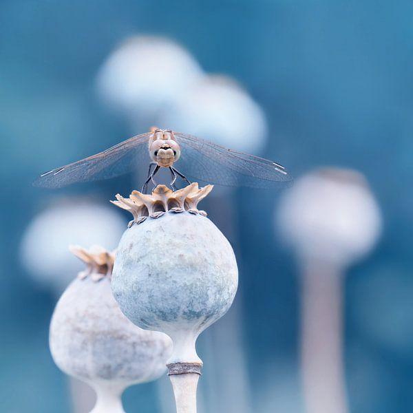 Libelle  van Violetta Honkisz