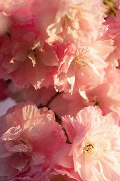 Rosenblüte von Clazien Boot