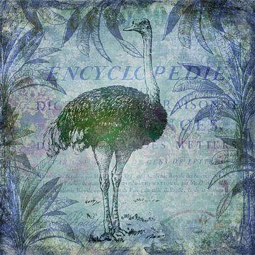 Vogel Strauss von