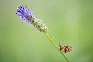 De vlinder en de bloem