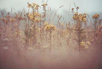 Blumen Teil 166