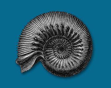 Ammoniet fossiel op petrol kleurige achtergrond van Peter Hermus