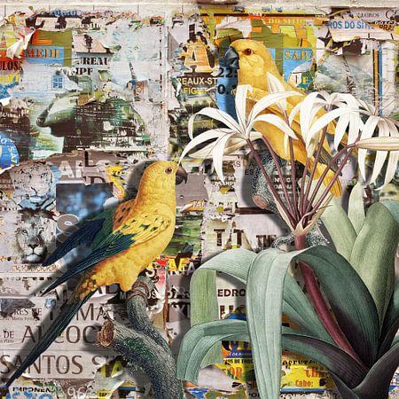 Street Art Parrots van Marja van den Hurk