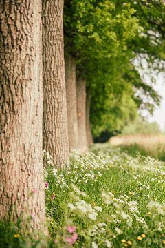 Fluitenkruid en andere wilde bloemen langs bomen  rij van Mayra Pama-Luiten