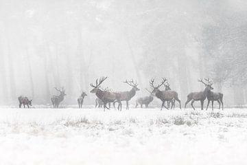 Rothirsche im Schnee. von Albert Beukhof