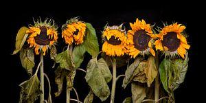 Vijf zonnebloemen van