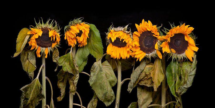 Vijf zonnebloemen van Toon de Vos