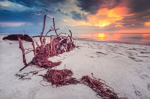 Idylle am Weststrand (Darß / Ostsee) von Dirk Wiemer