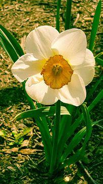 Spring von Mika'il Photography