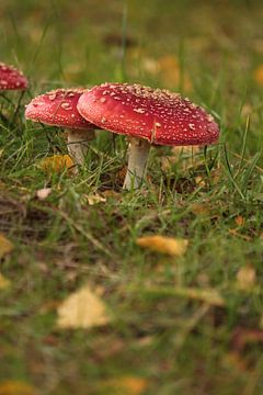 Champignons d'automne sur Heike Hultsch