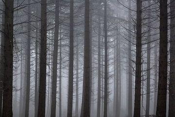 Mist von Hans Wijnveen