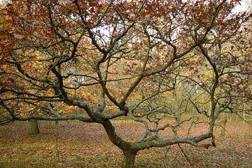 Herfstkleuren in het bos van Nicolette Vermeulen