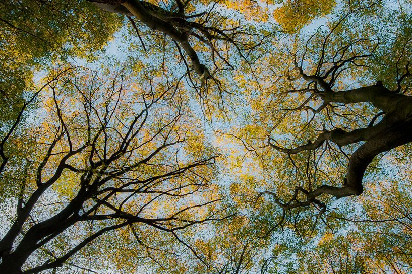 Above..... van Piet Haaksma