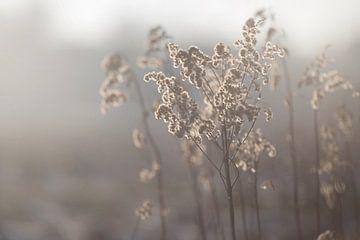 Winterzon von Jitske Cuperus-Walstra