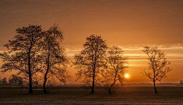 Winter Tree Sunrise von Sparkle King