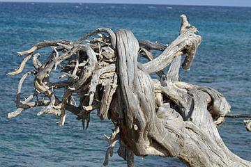 Oude boom van Jeanine den Engelsman