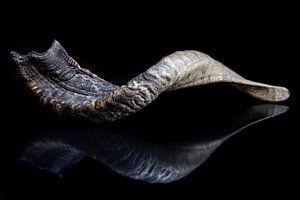 Reflet abstrait de corne sur fond noir sur Tessa Louwerens