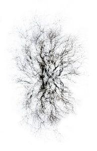 Abstract Collage van boom in zwart wit van Marianne van der Zee