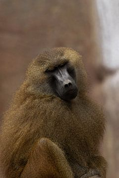 Monkey von Lars Hoppe