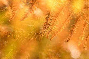Herfstkleuren 1 van Paulien Varkevisser