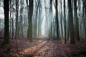 Drenthe, Bos, Nederland van Johanna Blankenstein
