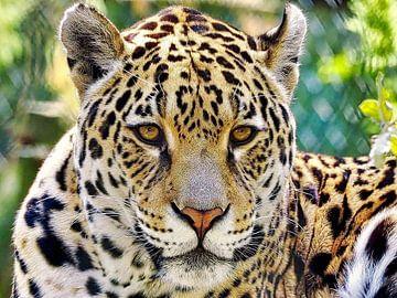 Leopard oder Panther von Eduard Lamping