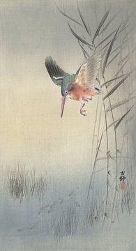 IJsvogel jagend op vis van Ohara Koson