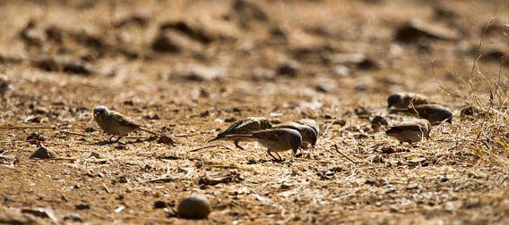 Vogels op de grond van Jan van Kemenade