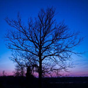 Blauwe uur (boom) van