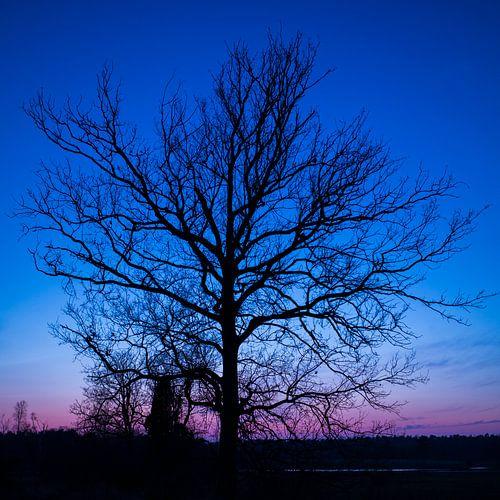 Blauwe uur (boom)