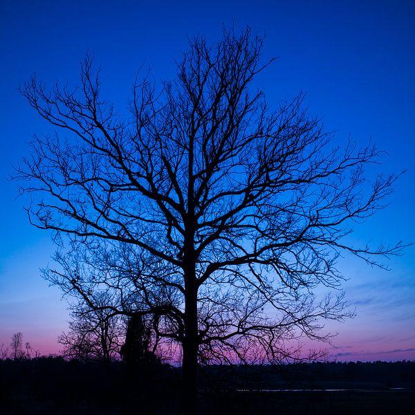 Blauwe uur (boom) van Eriks Photoshop by Erik Heuver