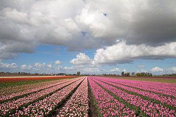 Bloeiende tulpen in het Noord-hollandse voorjaar van Maurice de vries