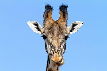 Girafe curieuse sur Angelika Stern