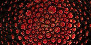 panorama van een rode gerbera in druppels