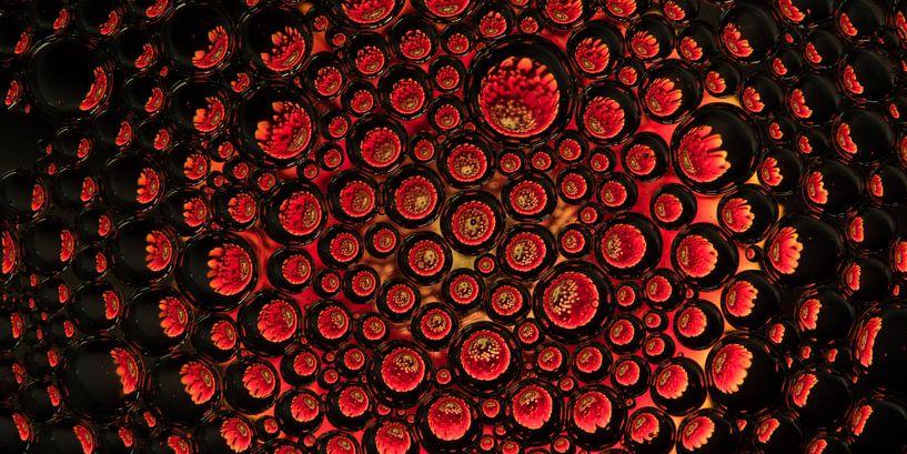 panorama van een rode gerbera in druppels van Marjolijn van den Berg