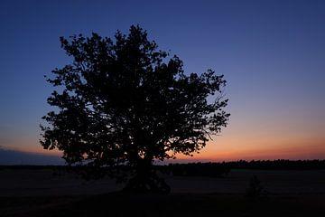 Sunset Brooksand - ein selten schönes Gebiet von Janine Poel