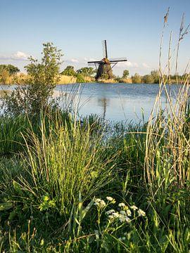 Poldermühlen-Naturschutzgebiet De Steendert von René Weijers