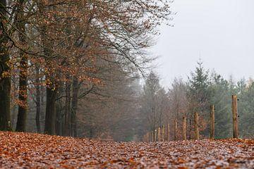 Herbstboden auf Kwintelooijen von Tania Perneel