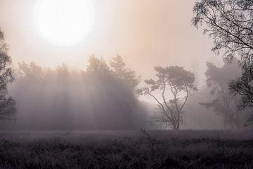 het regent zonnestralen van Tania Perneel