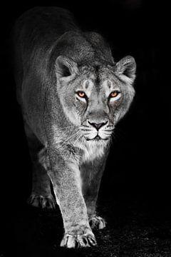 Eine prekäre Löwin taucht aus der Dunkelheit der Nacht im durchscheinenden Licht des Mondes auf, der von Michael Semenov
