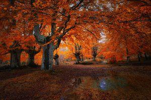 Magisch bos in Asturias . van Saskia Dingemans