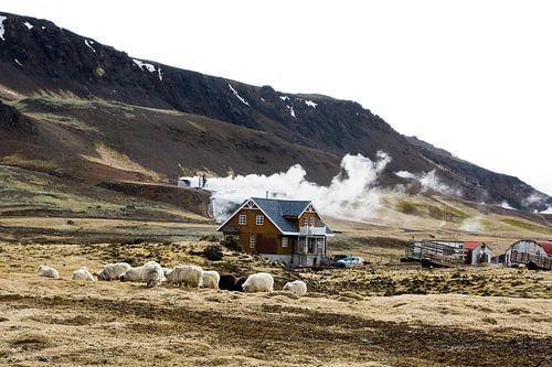 Living on hot boiling water, IJsland van